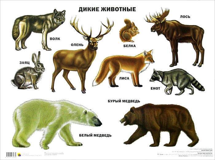 картинки зверей и название зверей