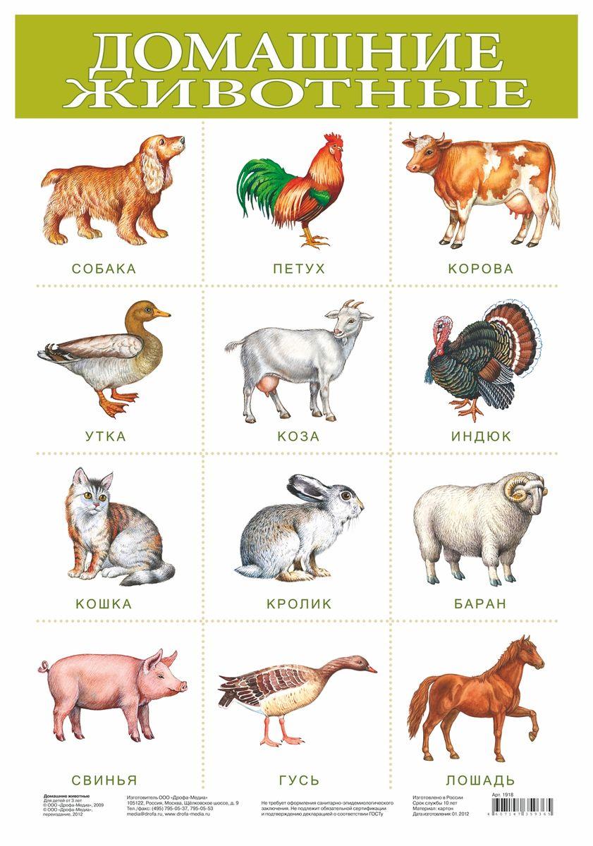 Все домашние животные в картинках с описанием
