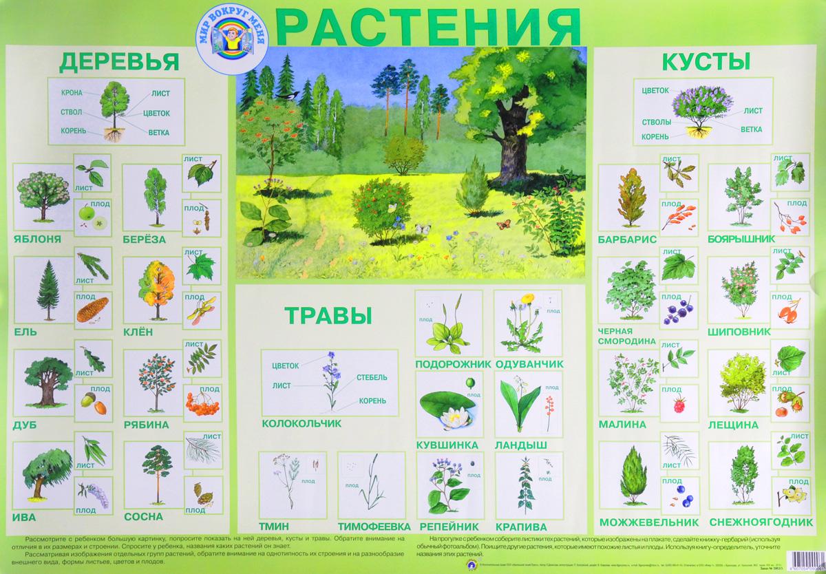 растения леса картинки и названия настоящее