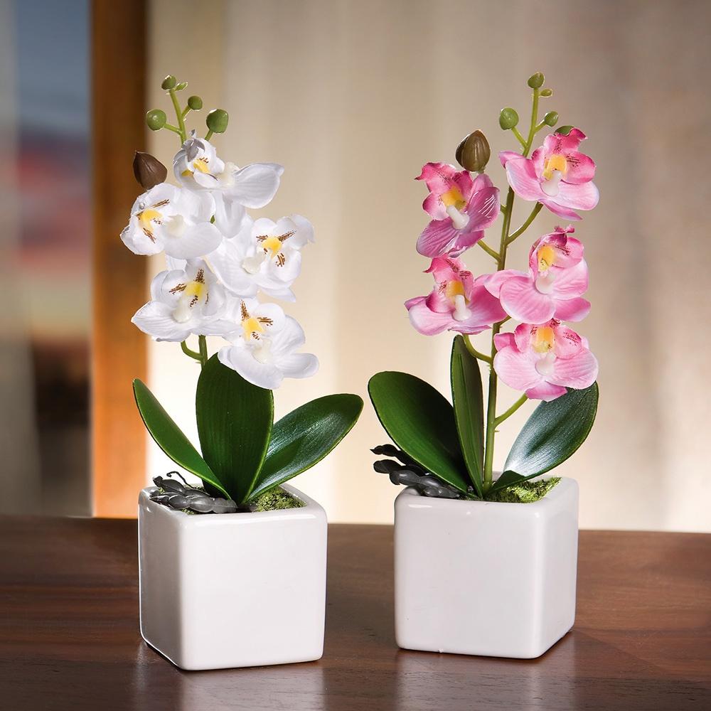 База володарского, фаленопсис цветок купить