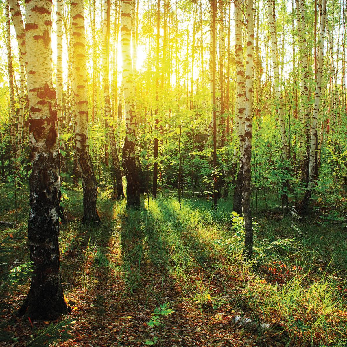 Фотографии русского леса